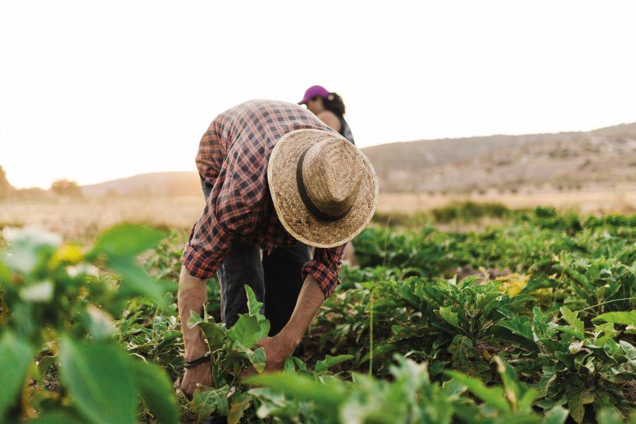 Medidas de adaptación para reducir la vulnerabilidad del sector agrícola - sostenibles